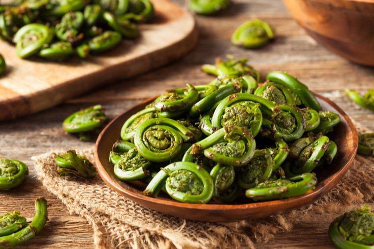 Fiddleheads_copy